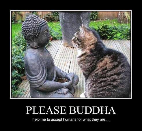 Buddha&Cat