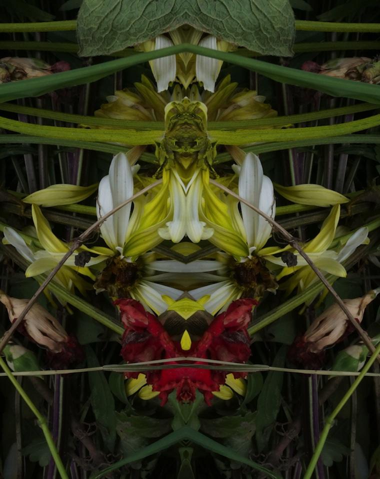 Kabuki symmetry