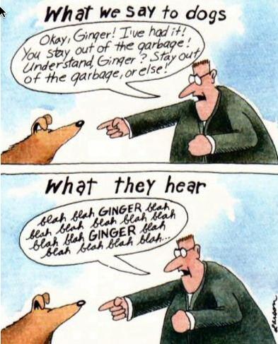 What Dogs Hear (Gary Larsen)
