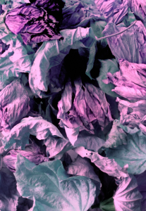 Hibiscus Petals #3
