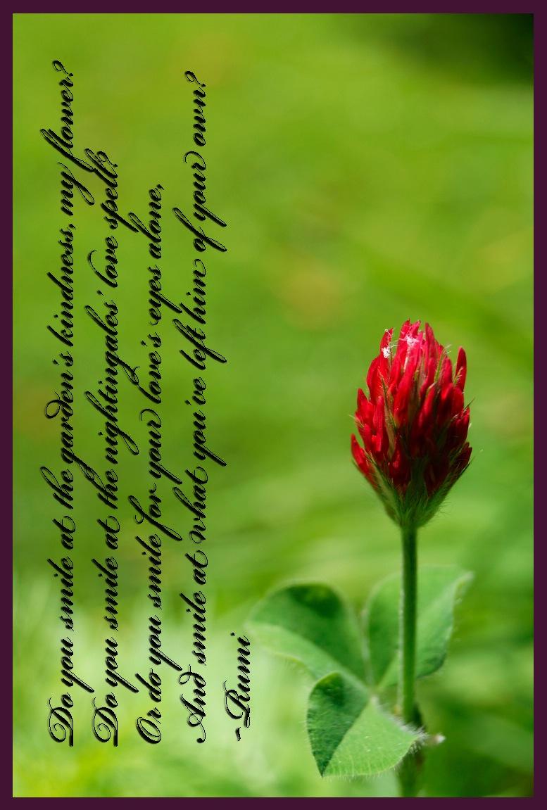 Rumi quatrain