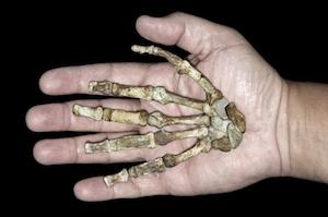 Sediba Hand